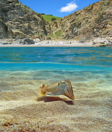 waterline: Above and below sea surface near the shore of a Mediterranean cove with a cuttlefish over sandy seabed underwater, France