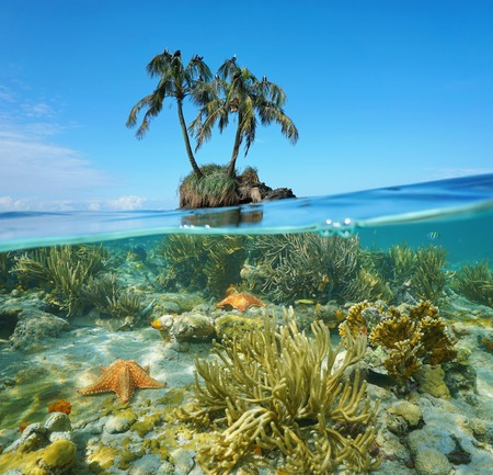 Split image over and under sea surface near an islet with two coconut palm trees above waterline and corals with starfish underwater, Caribbean, Panama