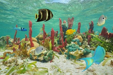 Kleurrijke tropische vissen en het mariene leven onderwater op een koraalrif van de Caribische zee Stockfoto