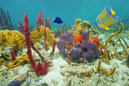 I colori della vita marina subacquea sul fondo del mare con coralli, spugne di mare e pesci tropicali, Mar dei Caraibi, America centrale