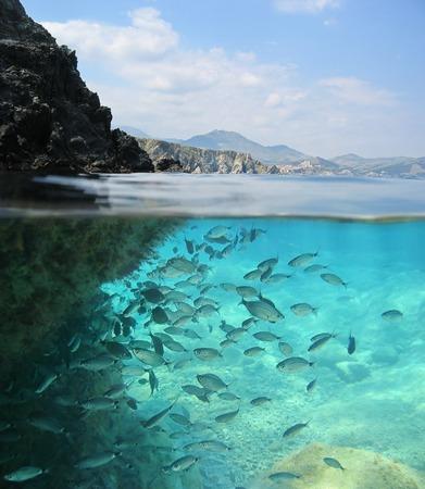 seabed: Immagine spaccata sopra e sotto la superficie dell'acqua, costa rocciosa sopra la linea di galleggiamento con una scuola di pesce sott'acqua, Mar Mediterraneo, Pirenei orientali, Francia