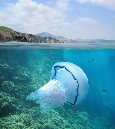 Podział obrazu nad i pod powierzchnią wody, skaliste wybrzeża na horyzoncie z wodą meduzy, Morza Śródziemnego, Pireneje Wschodnie, Francja
