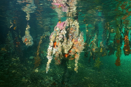 marine life: Underwater ecosystem, roots of red mangrove trees covered by marine life, Caribbean sea