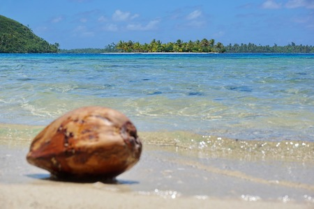 motu: A tropical islet at the horizon in the lagoon with a blurred coconut on the shore in foreground, Huahine island, Pacific ocean, French Polynesia