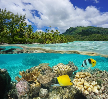 Por encima y por debajo de la superficie del agua en la laguna de Huahine cerca exuberante costa de corales y peces tropicales bajo el agua dividida por la línea de flotación, el océano Pacífico, Polinesia Francesa Foto de archivo - 52627294