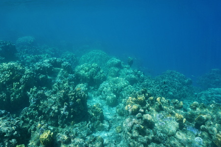 depth: Underwater landscape, edge of coral reef down to the abyss, Pacific ocean, French Polynesia