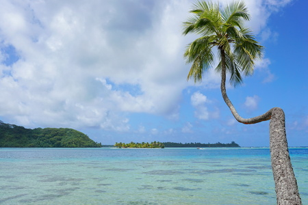 motu: A coconut tree leaning over the lagoon with an islet in background, Huahine island, Pacific ocean, French Polynesia