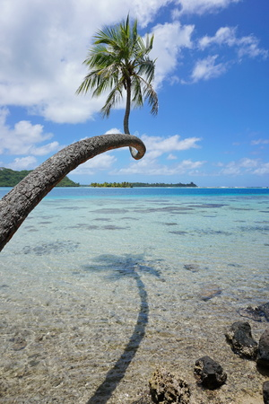 motu: A coconut tree and its shade above shallow water of the lagoon with islands in background, Huahine, Pacific ocean, French Polynesia
