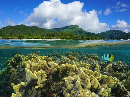 waterline: Split view over and under water surface in the lagoon with the coast of Huahine island above waterline and corals underwater, Pacific ocean, French Polynesia Stock Photo