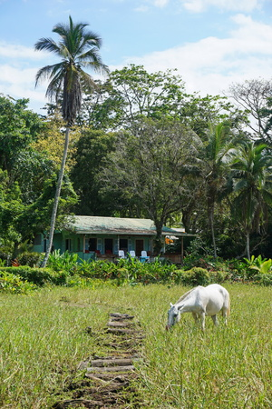 viejo: A typical house in Costa Rica with a horse in pasture in foreground, Puerto Viejo de Talamanca, Central America
