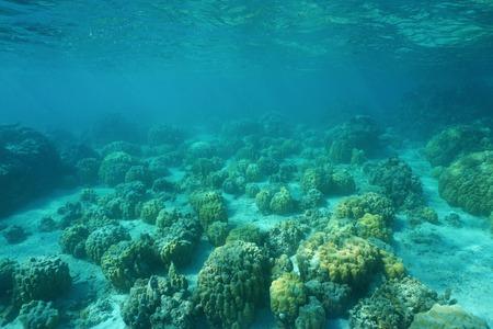 paysage sous-marin d'un plancher océanique peu profond avec des blocs de coraux du lobe, Huahine, océan Pacifique, Polynésie française