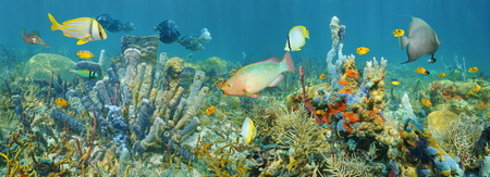 Coral reef underwater panorama with colorful marine life composed by tropical fishes and sea sponges, Caribbean sea Stock Photo
