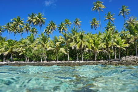 untouched: Untouched tropical shore with coconut trees seen from the water surface, Huahine island, Pacific ocean, French Polynesia Stock Photo