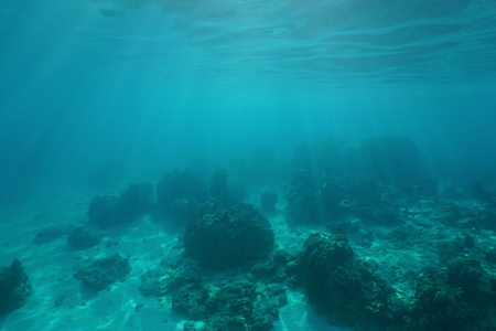 ocean floor: Underwater landscape, ocean floor with corals and sunlight through water surface, natural scene, Pacific ocean, French Polynesia