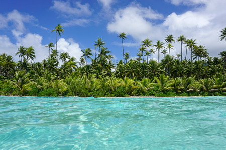 turquoise water: Coastline with coconut trees and turquoise water of an islet of Huahine, seen from water surface, Pacific ocean, French Polynesia Stock Photo