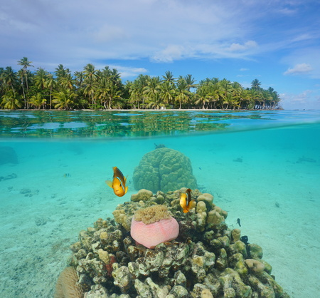 Above and below water surface, tropical islet shore with coconut trees and coral with anemone fish underwater in the lagoon of Huahine island, Pacific ocean, French Polynesia Stock Photo - 58653399