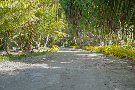 nui: Trail lined by tropical vegetation on the north of Huahine Nui island, Maeva, French Polynesia