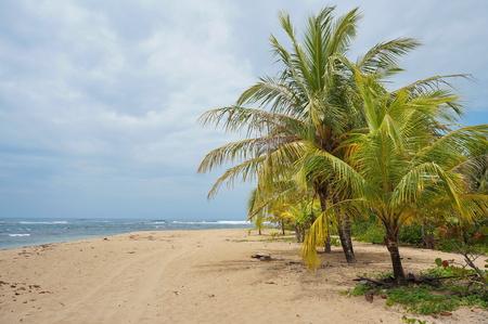 viejo: Sandy beach with coconut trees on the Caribbean coast of Costa Rica, Puerto Viejo de Talamanca, Central America