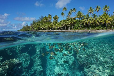 Above and below water surface, tropical shore with coconut trees and the reef with a shoal of fish underwater, Huahine island, Pacific ocean, French Polynesia 免版税图像