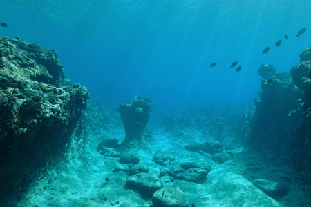 Onderwater landschap op de oceaanbodem, koraalrif gebeeldhouwd door de deining, Stille Oceaan, Frans-Polynesië