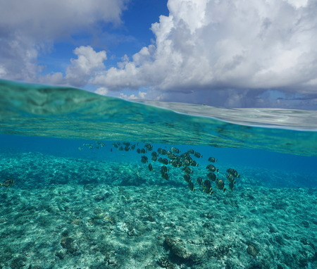 ocean water: Pacific ocean seascape, above and below water surface, sky with cloud and seabed on the fore reef with a shoal of fish underwater, Huahine island, French Polynesia Stock Photo