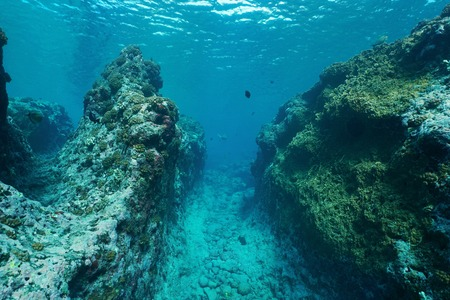 subaquatic: Underwater landscape on the outer reef carved by the swell, Huahine island, Pacific ocean, French Polynesia