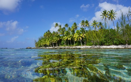 Tropical coast with coconut trees seen from the water surface, Huahine island, Pacific ocean, French Polynesia
