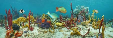 Onderwater panorama, zeebodem met kleurrijke onderwaterleven gecomponeerd door zee sponzen, koralen en tropische vissen, Caribische zee
