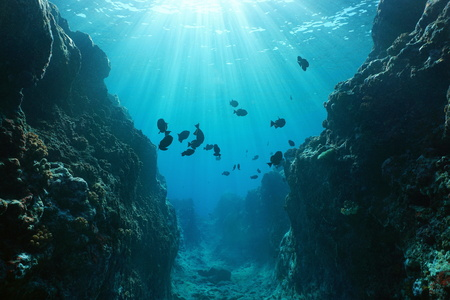Niewielki kanion podwodny rzeźbiony przez pęcznienie na przedniej rafie ze światłem słonecznym przez powierzchnię wody, wyspa Huahine, Ocean Spokojny, Polinezja Francuska