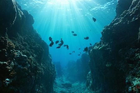 Pequeño cañón submarino tallado por el oleaje en el arrecife delantero con luz solar a través de la superficie del agua, isla Huahine, Océano Pacífico, Polinesia Francesa