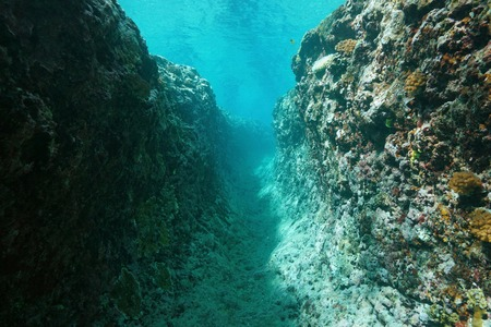 subaquatic: Underwater trench into the outer reef, Pacific ocean, French Polynesia