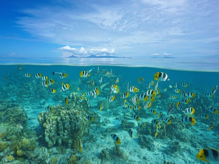 Above and below sea surface with Raiatea and Tahaa islands at the horizon and a shoal of tropical fish with shark underwater, Pacific ocean, French Polynesia