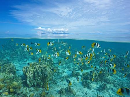 Au-dessus et en dessous de la surface de la mer avec Raiatea et Tahaa îles à l'horizon et un banc de poissons tropicaux avec le requin sous marin, océan Pacifique, Polynésie française