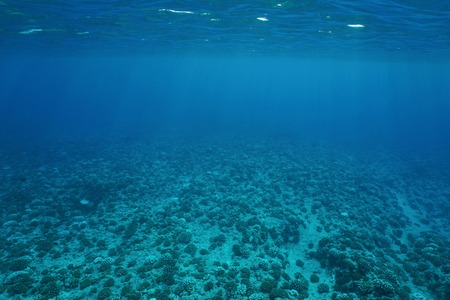 ocean background: Underwater scenery, ocean floor on the outer reef slope, Pacific ocean, French Polynesia