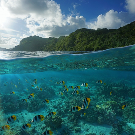 chaetodon: Split image above and below sea surface with wild green coast and a school of fish with corals underwater, Huahine island, Pacific ocean, French Polynesia Stock Photo