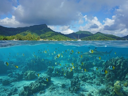 reef: Above and below sea surface, the coast of Huahine island and coral reef fish school with a shark underwater, Pacific ocean, French Polynesia