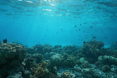 ocean floor: Shallow ocean floor with coral reef and fish, natural scene, Rangiroa lagoon, Pacific ocean, French Polynesia