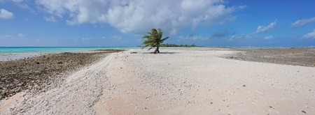 motu: Panorama of a sandbar with only one coconut palm tree, atoll of Tikehau, Tuamotu archipelago, French Polynesia, Pacific ocean Stock Photo