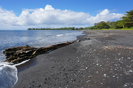 south pacific ocean: Black sand beach with a driftwood trunk near Tautira village, Tahiti Iti island, French Polynesia, south Pacific ocean
