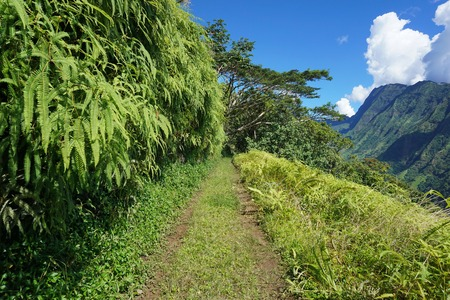 south pacific: Path to the mountains of Tahiti island, with the Tuauru valley on the right side, French Polynesia, south Pacific