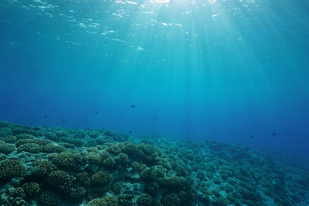 Underwater coral reef ocean floor with sunlight through water surface, natural scene, fore reef of Huahine island, Pacific ocean, French Polynesia Archivio Fotografico