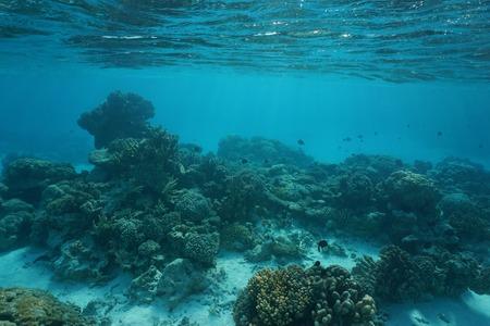 Underwater coral reef on a shallow ocean floor, natural scene, Rangiroa lagoon, Tuamotu, Pacific ocean, French Polynesia