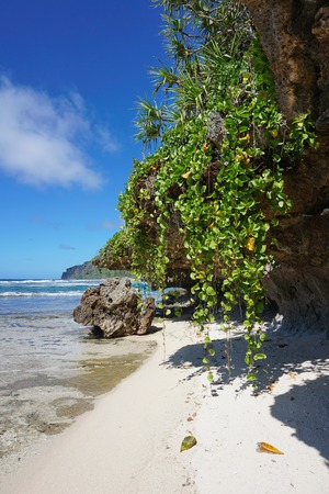 south pacific ocean: Sea shore with small sandy beach and creeping plant hang down from the rocks, Rurutu island, south Pacific ocean, Austral archipelago, French Polynesia