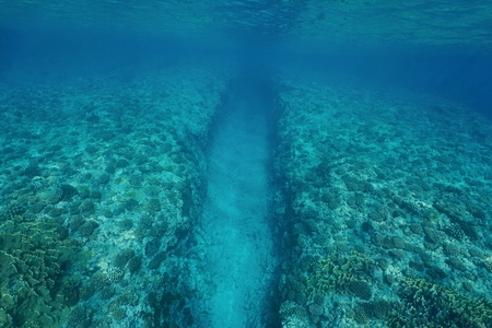 ocean floor: Natural trench underwater sea into the fore reef slope with corals on the ocean floor, Huahine island, Pacific ocean, French Polynesia Stock Photo
