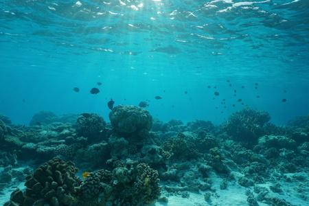 Onderwater op een ondiepe koraalrif met vis, natuurlijke scène, lagune van Rangiroa, Stille Oceaan, Frans-Polynesië