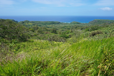 south pacific: Green vegetation landscape from the heights of the island of Rurutu, south Pacific ocean, Austral archipelago, French Polynesia Stock Photo