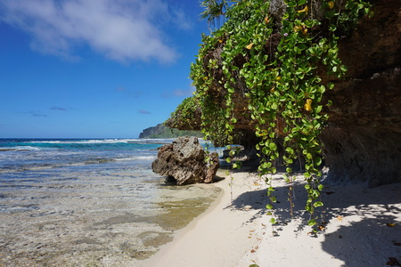 south pacific ocean: Sea shore with creeping plant hang down from the rocks, Rurutu island, south Pacific ocean, Austral archipelago, French Polynesia Stock Photo