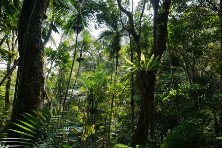 epiphyte: Vegetation in a forest of New Caledonia, Grande Terre island, south Pacific