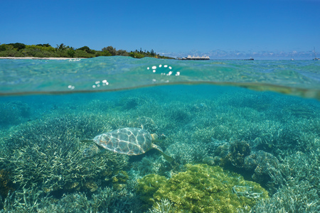 Over and under the sea, a turtle underwater on a coral reef and island with a resort above the surface, Maitre islet, Noumea, New Caledonia, south Pacific ocean Stok Fotoğraf