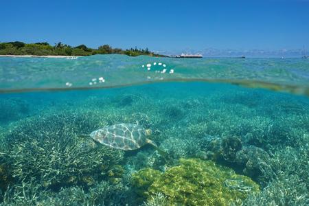 Over en onder de zee, een schildpad onderwater op een koraalrif en eiland met een resort boven het oppervlak, Maitre eilandje, Noumea, Nieuw-Caledonië, ten zuiden van de Stille Oceaan
